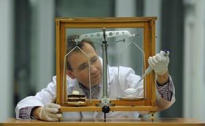 Za pomocą transplantacji niewielkiej liczby nowych neuronów do uszkodzonego obszaru mózgu można przywrócić jego funkcje. Na zdjęciu dr Artur Czupryn z Instytutu Biologii Doświadczalnej im. M. Nenckiego w Warszawie. (Źródło: Instytut Nenckiego, Grzegorz Krzyżewski)