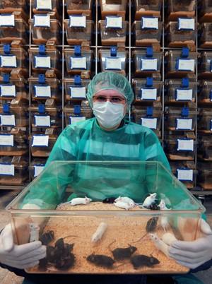 Dr Witold Konopka ze zmodyfikowanymi genetycznie myszami, u których można wyłączyć gen Dicer. Zwierzęta wyhodowano w Pracowni Modeli Zwierzęcych Centrum Neurobiologii Instytutu Nenckiego. (Źródło: Instytut Nenckiego, Grzegorz Krzyżewski)