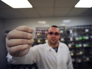 Jeden z genów, odkryty w Instytucie Biologii Doświadczalnej im. M. Nenckiego w Warszawie, wykazuje silne działanie zapobiegające rozwojowi nowotworów skóry typu nieczerniakowego. (Źródło: Instytut Nenckiego, Grzegorz Krzyżewski) #amu Ramowego Unii Europejskiej.