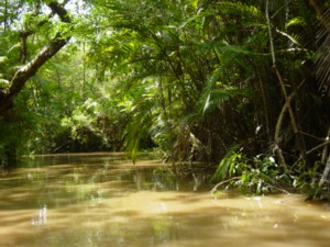 Las deszczowy Amazonii